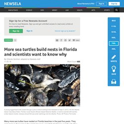 More sea turtles build nests in Florida and scientists want to know why