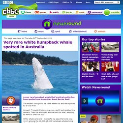 CBBC Newsround: News and fun facts for kids - Very rare white humpback whale spotted in Australia