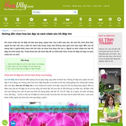 Hướng dẫn chọn hoa lan đẹp và cách chăm sóc hồ điệp tím