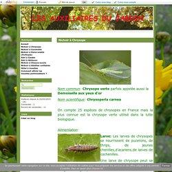 Nichoir à Chrysope - Les auxiliaires du jardin