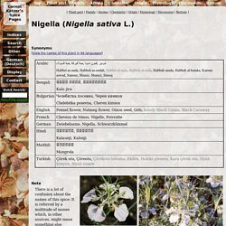 Spice Pages: Onion seeds (Nigella sativa, falsely Black Cumin or Black Caraway)