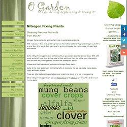 Nitrogen Fixing Plants; leguminous nutrient gleaners