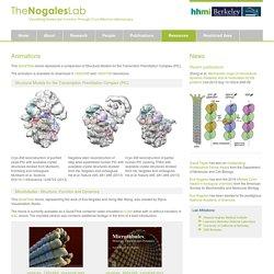Nogales Lab - CryoEM