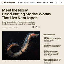 Meet the Noisy, Head-Butting Marine Worms That Live Near Japan