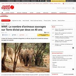 WWF. Le nombre d'animaux sauvages sur Terre divisé par deux en 40 ans