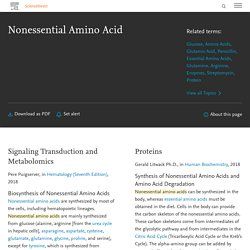 Nonessential Amino Acid - an overview