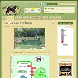North American Bear Center - Our Bears and their Habitat