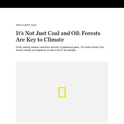 It's Not Just Coal and Oil: Forests Are Key to Climate