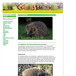 Notice Nature - October Species of the Month