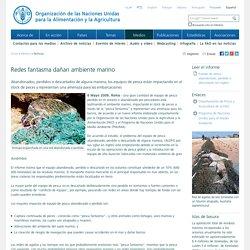 Noticias:Redes fantasma dañan ambiente marino