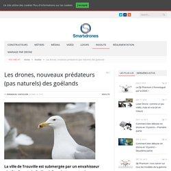 Les drones, nouveaux prédateurs (pas naturels) des goélands