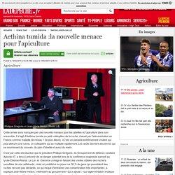 Aethina tumida :la nouvelle menace pour l'apiculture - 19/02/2015 - ladepeche.fr