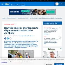 FRANCE BLEU 09/10/19 Nouvelle saisie de chardonnerets élégants à Port-Saint-Louis-du-Rhône