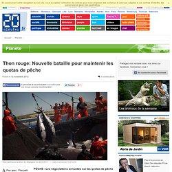 Thon rouge: Nouvelle bataille pour maintenir les quotas de pêche