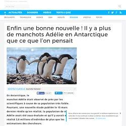 Enfin une bonne nouvelle ! Il y a plus de manchots Adélie en Antarctique que ce que l'on pensait