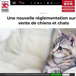 Une nouvelle réglementation sur la vente de chiens et chats