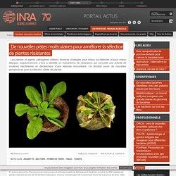 INRA 10/05/16 De nouvelles pistes moléculaires pour améliorer la sélection de plantes résistantes
