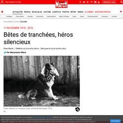 11 novembre 1918 - 2018 - Bêtes de tranchées, héros silencieux