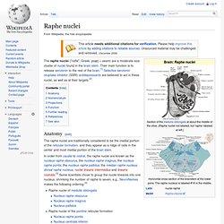 Raphe nuclei