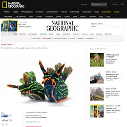 Nudibranchs—Photo Gallery—National Geographic Magazine