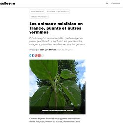 Les animaux nuisibles en France, puants et autres vermines