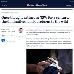 Numbats return to the wild after thought to be extinct for a century