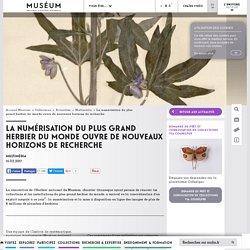 La numérisation du plus grand herbier du monde ouvre de nouveaux horizons de recherche