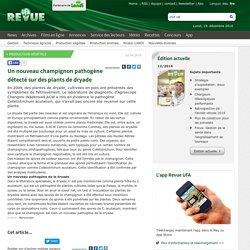 CONFEDERATION SUISSE 01/06/10 Un nouveau champignon pathogène détecté sur des plants de dryade