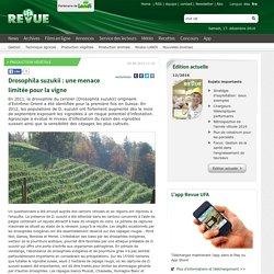 REVUE UFA (Suisse) 02/09/13 Drosophila suzukii : une menace limitée pour la vigne