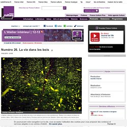 Numéro 26. La vie dans les bois - Création Radiophonique