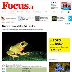 Nuove rane dallo Sri Lanka