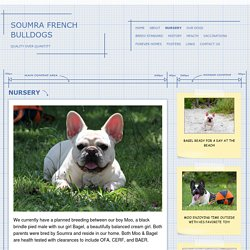 SOUMRa FRENCH BULLDOGS