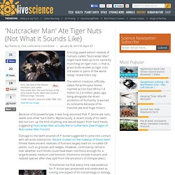 'Nutcracker Man' Ate Tiger Nuts (Not What it Sounds Like)