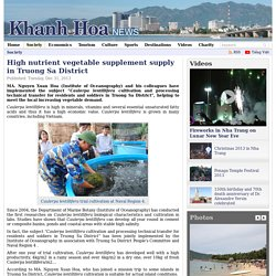 High nutrient vegetable supplement supply in Truong Sa District - Khanh Hoa News