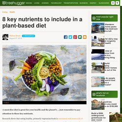 8-key-nutrients-to-include-in-your-plant-based-diet