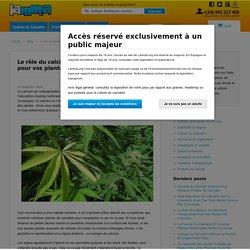 Le rôle du calcium, un nutriment fondamental pour vos plantes de cannabis