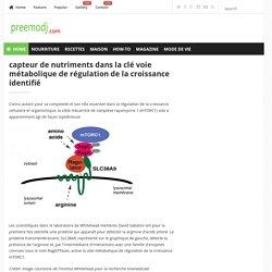 capteur de nutriments dans la clé voie métabolique de régulation de la croissance identifié / preemodj.com