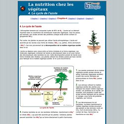 Nutrition-4