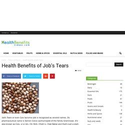Job's tears nutrition facts and health benefits