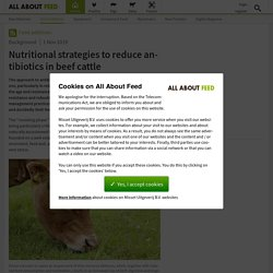ALL ABOUT FEED 01/11/19 Nutritional strategies to reduce antibiotics in beef cattle