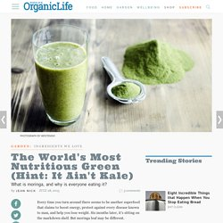 The World's Most Nutritious Green (Hint: It Ain't Kale)
