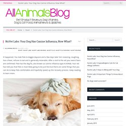 NuVet Labs: Your Dog Has Canine Influenza, Now What?