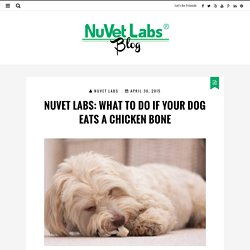 NuVet Labs: WHAT TO DO IF YOUR DOG EATS A CHICKEN BONE
