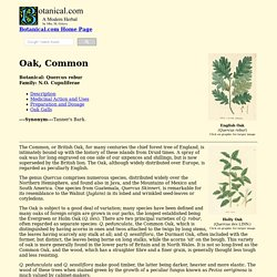 Oak, Common