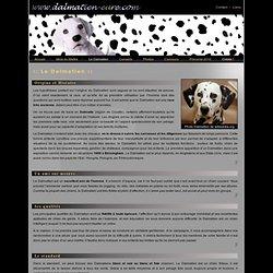 Le chien Dalmatien, race, origine, histoire, qualités, standard, obéissance, alimentation, surdité, gène SW, tan