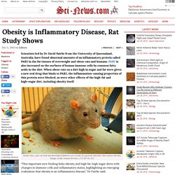 Obesity is Inflammatory Disease, Rat Study Shows