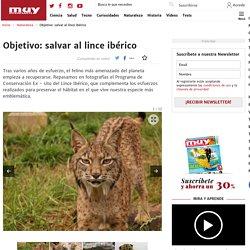 Objetivo: salvar al lince ibérico - El felino más amenazado