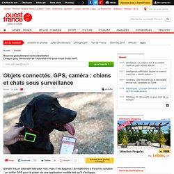 Objets connectés. GPS, caméra : chiens et chats sous surveillance