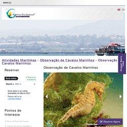 Observação de cavalos-marinhos no Algarve, saídas Fuseta - Passeios RiaFormosa