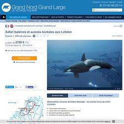 Observation aurores boréales Norvège - Observation animalière Norvège - Safari baleines et aurores boréales aux Lofoten